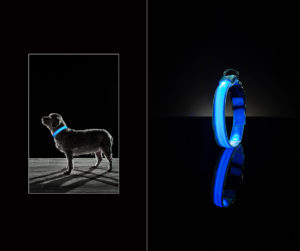 Product photography of a blue LED glow-in-the-dark dog collar